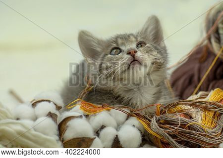 Funny Kitten And Ball Of Thread In Various Colors. Small Kitten With Colorful Ball Of Threads
