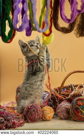 Playful Cute Kitten Cat Chewing Ball Of Threads. Cat Playing With A Ball Of Yarn In Various Colors