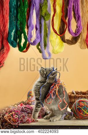 Little Playful Kitten With Colorful Thread Balls. Nice Kitten Playing Clew Or Woolen Ball.