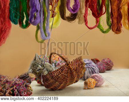 Kitten Sitting In Basket With Ball Of Yarn. Kitten With Balls Of Yarn In The Basket.