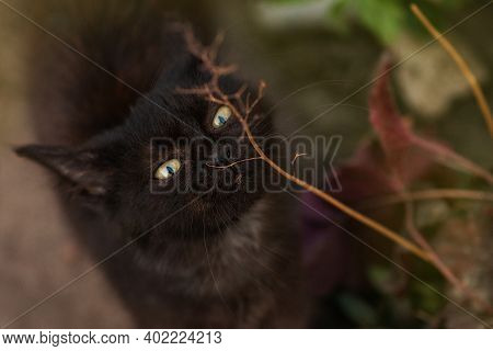 Cute Cat Otdoor Gnaws Branch Near Green Grass.