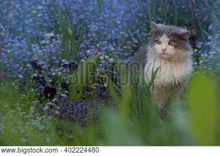 Grey Kitten With Forget Me Nots