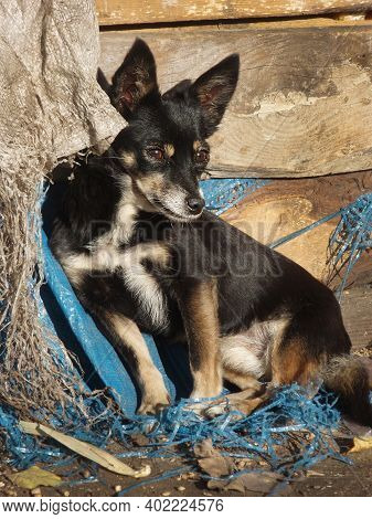 Street Homeless Puppy. Homeless Stray Dog On The Rustic Street