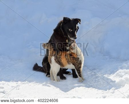 Cat And Dog Kissing On A Winter Walk. Dog And A Cat Giving Kisses.