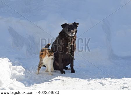 Young Dog Is Playing With A Cat On A Winter Day In A Garden. Dog Playing In The Snow With Cat. Portr