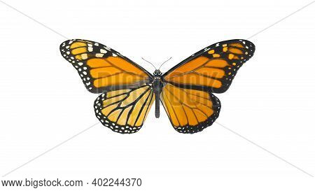 Macro Shot Of Big Monarch Butterfly. Top View Of Natural Yellow Butterfly Isolated On White Backgrou