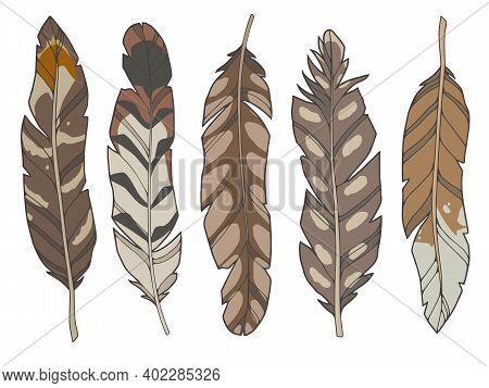 Cartoon Style Illustration Vector Set Of Different Natural Brown Eagle, Duck And Wader Bird Feathers