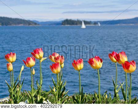 Springtime Sidney Shore