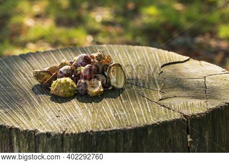 Chestnuts In Green Wrapping And Without Wrapping On A Wooden Bench. The Photo Has A Nice Bokeh In Th