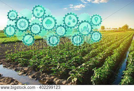 Smart Farm System, Innovation Technology. Agricultural Management, Startups, Improvements. Innovatio
