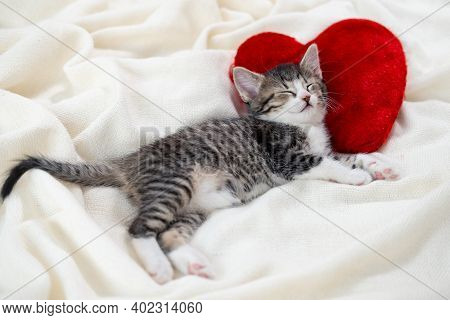 Valentines Day Cat. Small Striped Kitten Sleeping On Heart Shape Red Pillow On Light White Blanket O