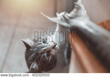 A Hungry Cat Steals Fish From The Cutting Board On The Table. The Pet Wants To Eat