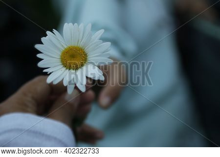 Take And Give Concept Background Of Two Persons Hold A White Daisy Flower Blossom In Hand. Kindness
