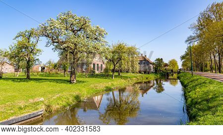 Typical Dutch Village Scape With Small Traditonal Houses Reflected In The Water And Flowering Fruit