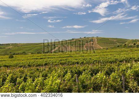 Tokaj landscape with vineyard, Unesco site, Hungary