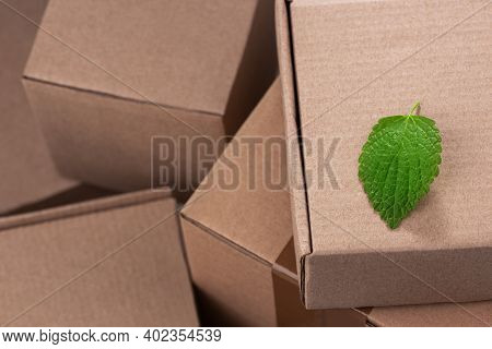 Green Leaf On A Pile Of Cardboard Boxes