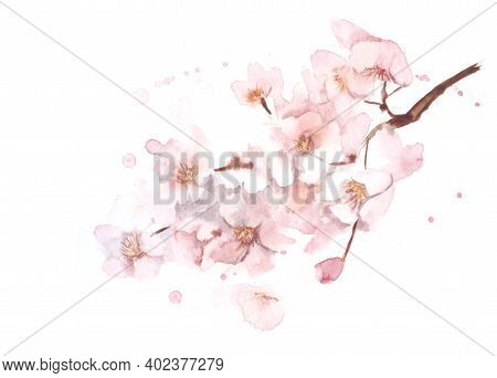 Watercolor Tender Image Of Blurred Blooming Cherry Twig With Lots Of Small Gentle Pink Flowers With