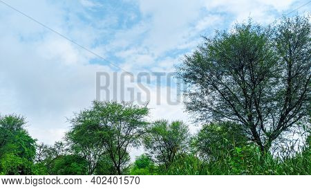Blue Sky With White Rainy Clouds In The Green Farmland. Close Up View Of Cloud, Trees And Crops