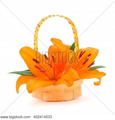 Two Yellow Lily In Basket Isolated On White Background.