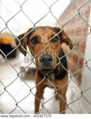 A Shelter Dog At An Adoption Shelter Is Looking Sad Through A Fence In A Vertical Image Format