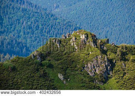 Summer Mountain Rocky Ridge And Dwarf Alpine Pine Bushes. Marmaros Pip Ivan Mountain, Carpathian, Uk