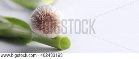Fresh Leek Over Gray Background, Panoramic Image