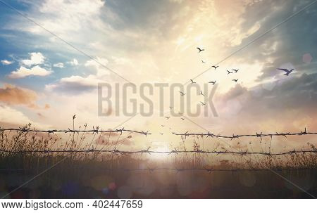 Holocaust Memorial Day (hmd) Concept: Silhouette Of Birds Flying And Barbed Wire At Sunset Backgroun