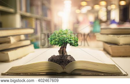 Teacher Day Concept: Big Tree With Soil On Opening Old Book In Blurred Library Background
