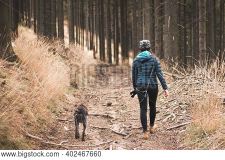 Young Woman In Winter Clothes And Her Dog Cesky Fousek Walks Through Forest In Morning. Walk In The