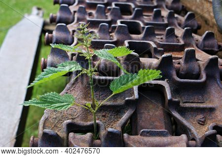 Old Tractor. Tractor Track With Nettle. Tractor Track And One Nettle