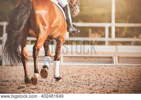 A Bay Horse With A Long Dark Tail Walks Through An Outdoor Arena At A Dressage Competition, Illumina