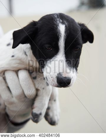 Take Dog From Shelter And Give It Happy Life. Small Stray Puppy Mongrel With Beautiful Big Kind Brow