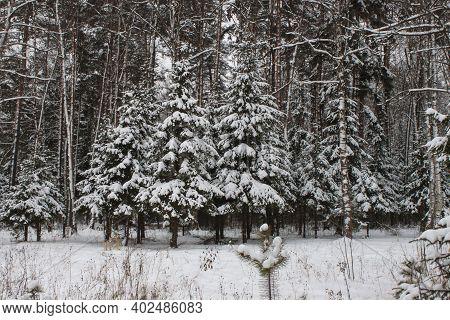 Winter Snow Forest Road Landscape. Snowy Winter Forest Road. Winter Snow Forest Road View. Winter Ro
