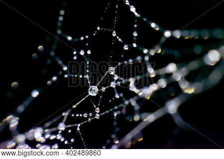 Natural Background With Filigree Spiderweb.lots Of Tiny Droplets On Web Threads, Macro Photo