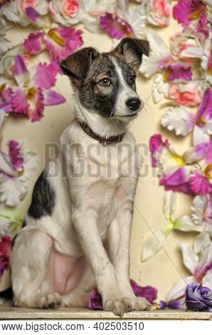 White With Brown Spots Puppy Pooch On A Background Of Flowers