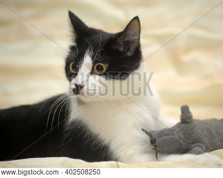 Lovable Playful Black And White Cat Close Up