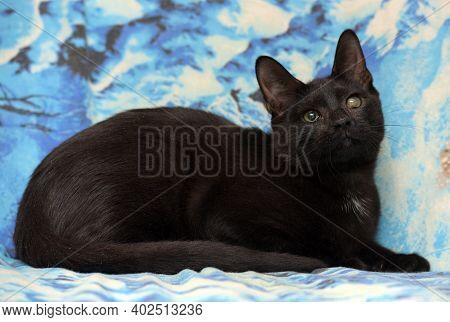 Black Cat With Cataract Eye
