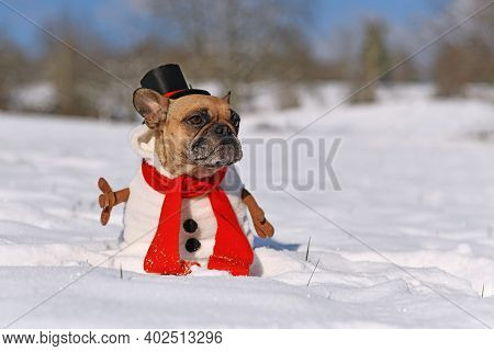 Funny French Bulldog Dog Dressed Up As Snowman With Full Body Suit Costume With Red Scarf, Fake Stic