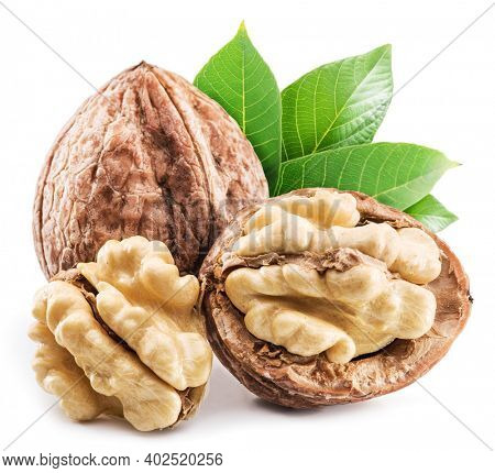 Walnuts and walnuts in green husk with leaves isolated on white background.