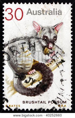 Postage stamp Australia 1974 Common Brushtail Possum