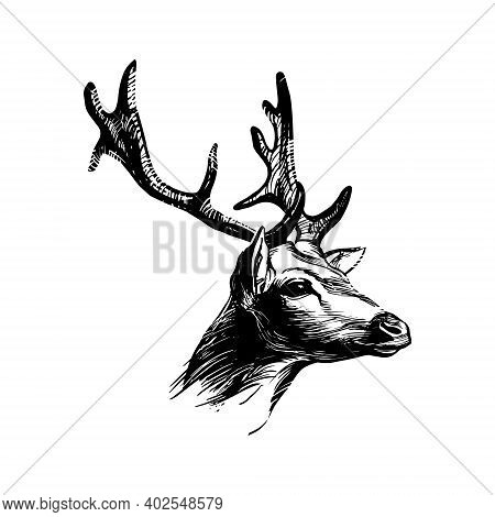 Deer Head. Graphic Ink Drawing For Print, Vintage Hipster Style. Symbol Of Nobility.