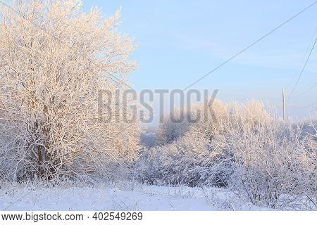 Russian Nature In Winter, Christmas Background. After A Snowfall, Tree Branches Are Covered With Sno