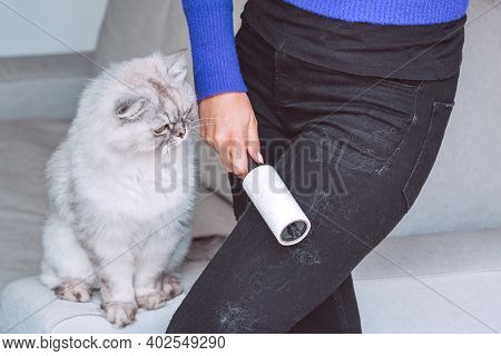 Woman Cleaning Black Clothes With Lint Roller Or Sticky Roller From Grey Cats Hair. Clothes In Pet F