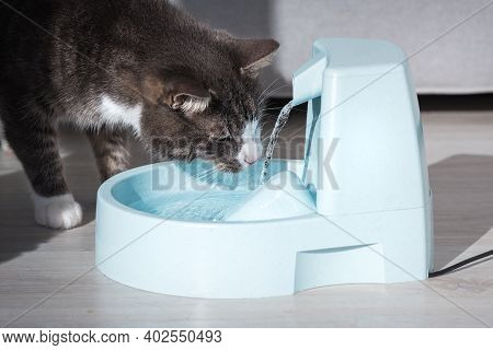 Cute Stripped Cat Drinking From Water Dispenser Or Water Fountain. Pet Thirst. Dehydration In A Cat