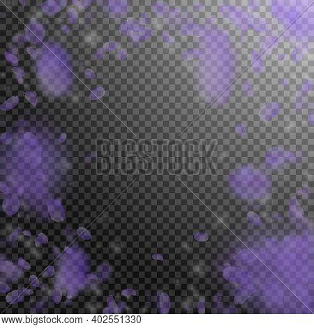Violet Flower Petals Falling Down. Dramatic Romantic Flowers Vignette. Flying Petal On Transparent S