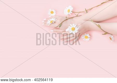 Young Woman Moisturizes Her Hand With Cosmetic Cream. Chamomile Flowers On Pink Background. Flat Lay