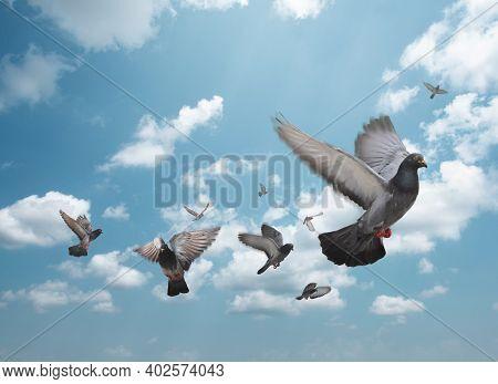 Flock Of Birds Flying In The Sky. Flock Of Pigeons In The Blue Sky.