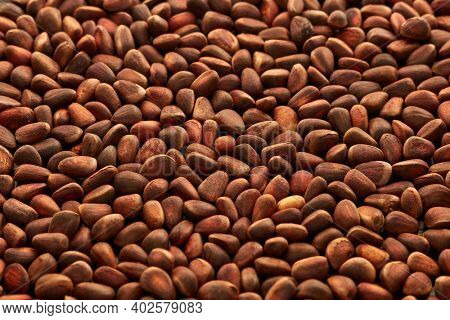 Background from pine nuts. Pinus sibirica, siberian pine nuts