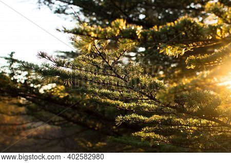 Forest Sunbeams Through Trees View. Sunbeams Forest. Sunrays In Deep Forest. Beautiful Landscape