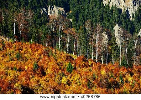 Mountain autumn landscape